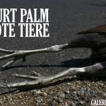 Kurt Palm – Tote Tiere